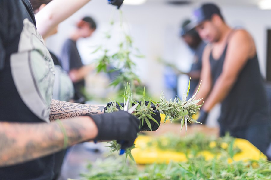 security tips for cannabis growers