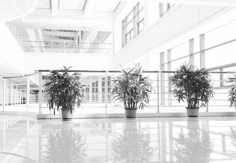 Indoor Plant Care Gardaworld